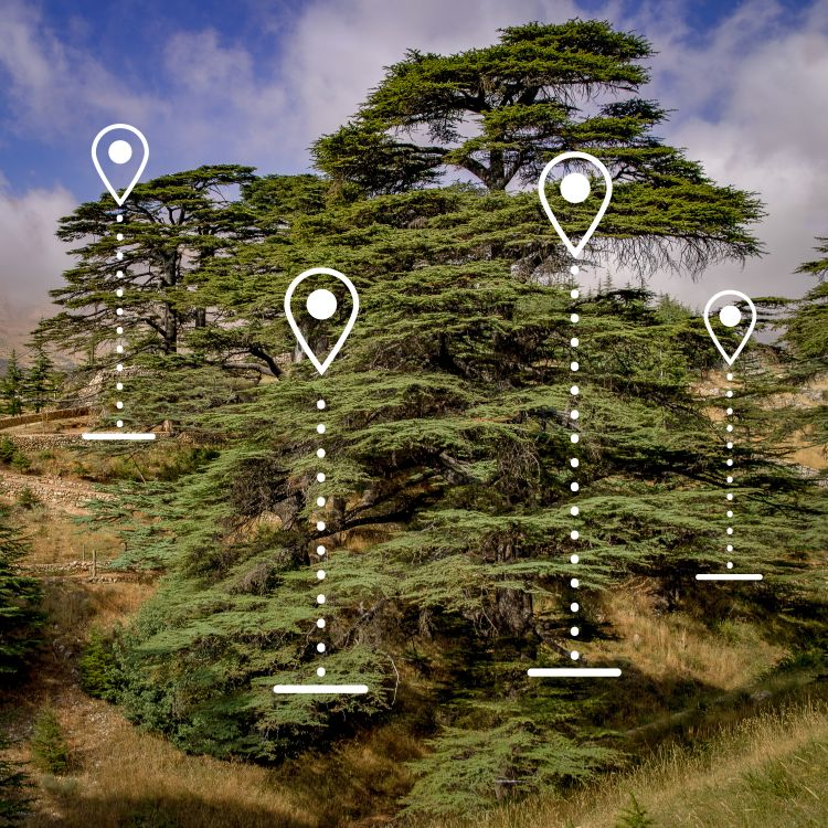 CedarCoin uses GPS coordinates to tag trees