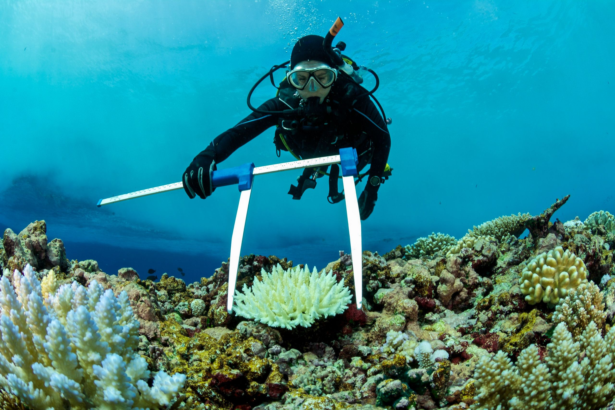 Acidification killing coral reefs
