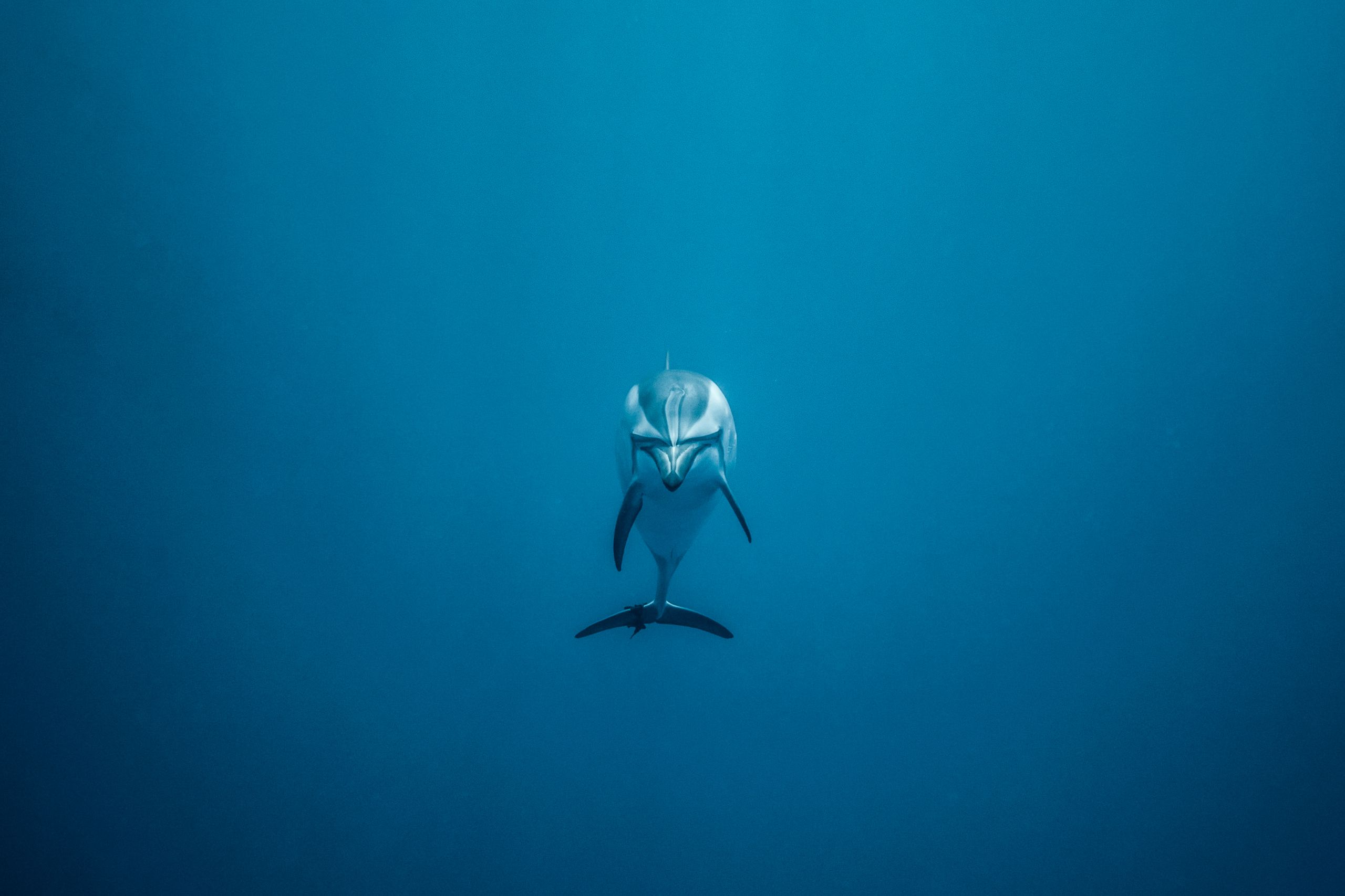 A lone dolphin